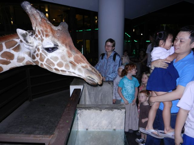 Feeding a giraffe at the entrance to the zoo.