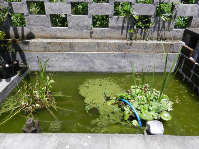 Our own little fish pond