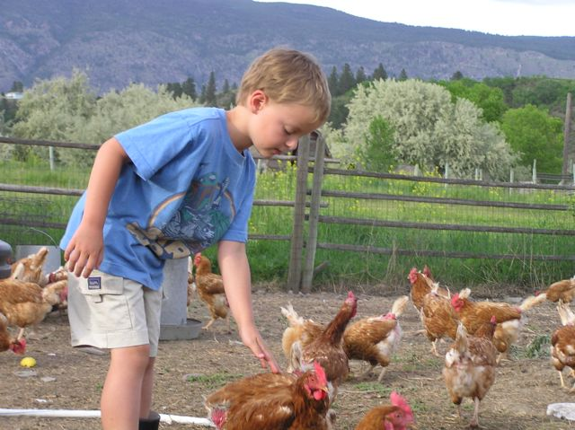 Our chicken whisperer.